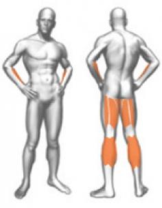 Формирующиеся мышцы