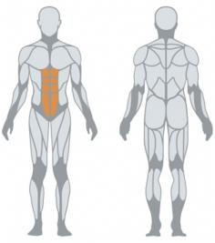 Работающие мышцы