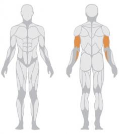 Рабтающие мышцы