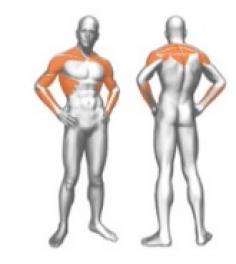 Для развития мышц плечевого пояса